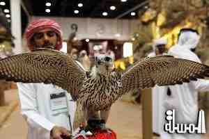 The 2014 International Festival of Falconry attracts participation from 80 countries