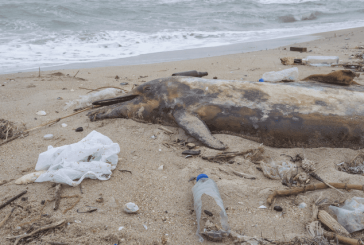 15 Ways To Reduce Plastic Pollution
